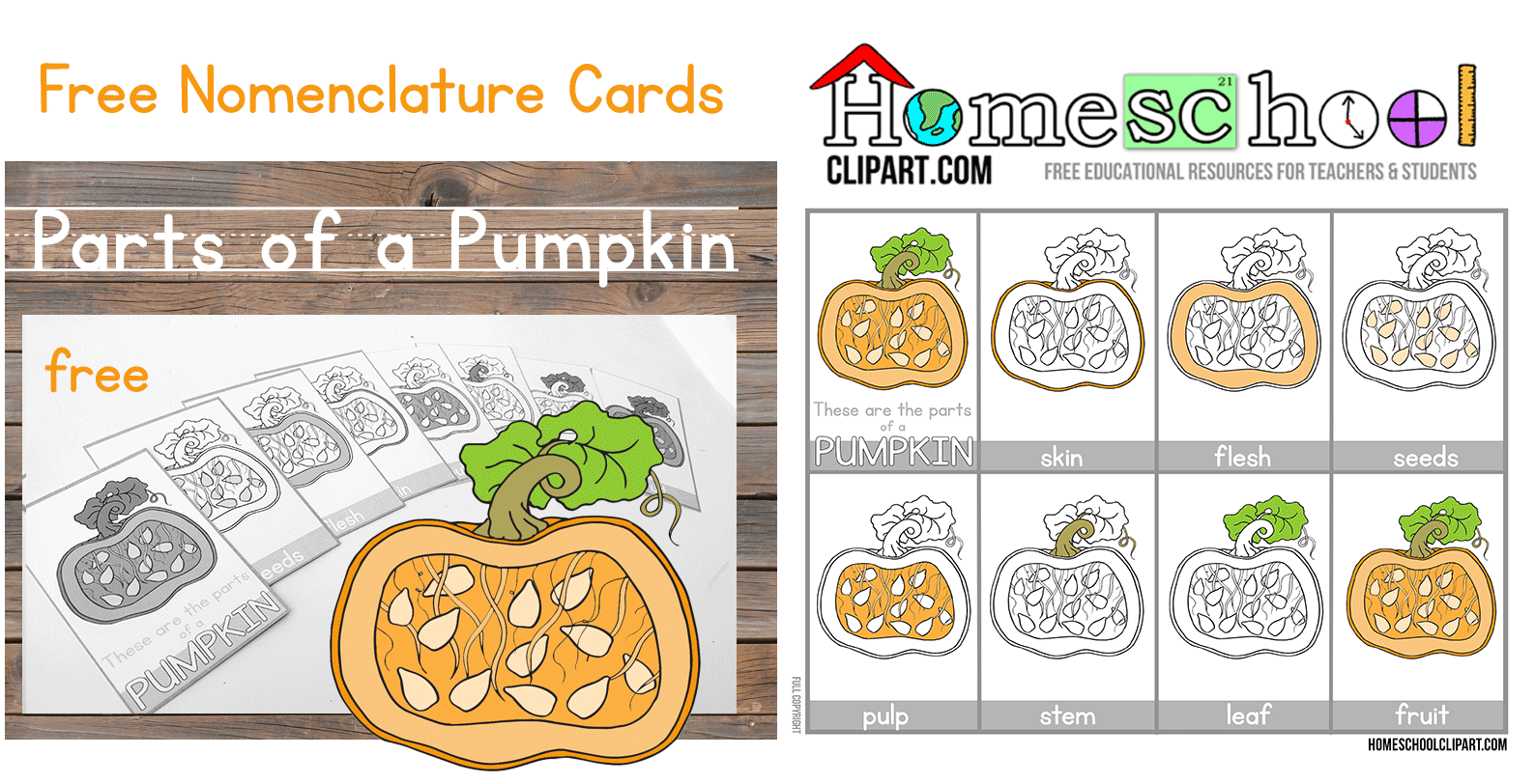 Pumpkin Parts Worksheet For Preschoolers Pumpkin Best
