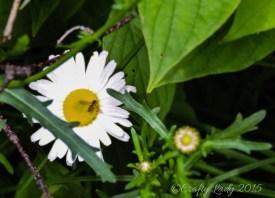 daisy.use 2jpg