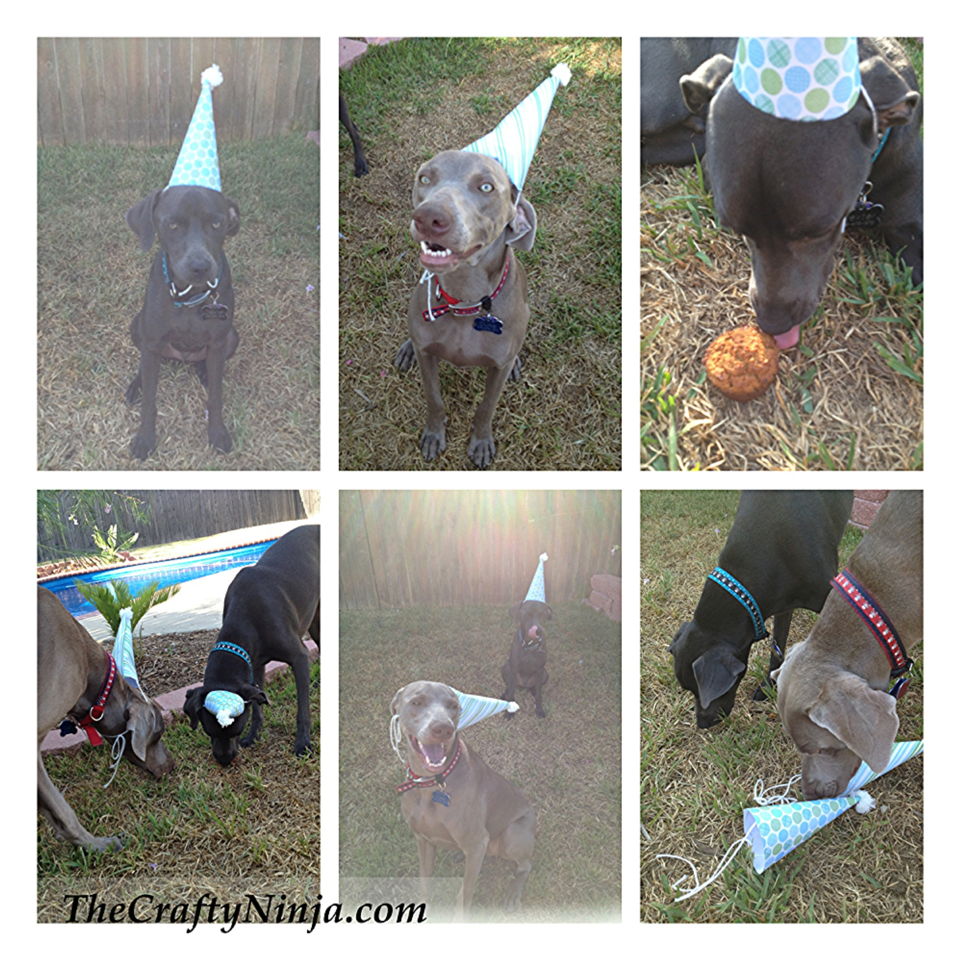 Dog Birthday To Make A Party Hat