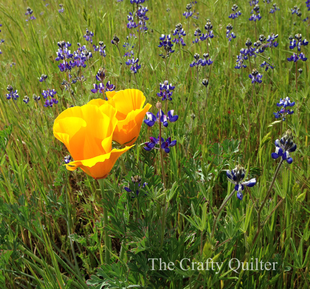 Northern California Spring flowers