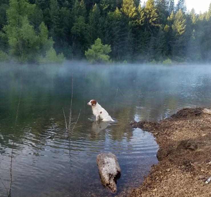 Cooper on Lake Shasta