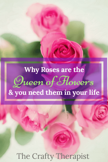 pinterest graphic roses queen of flowers