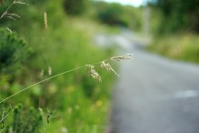 By the road