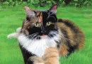 """Featured Artwork: A New Cat Mystery Series, """"Calico Cat Mysteries"""""""