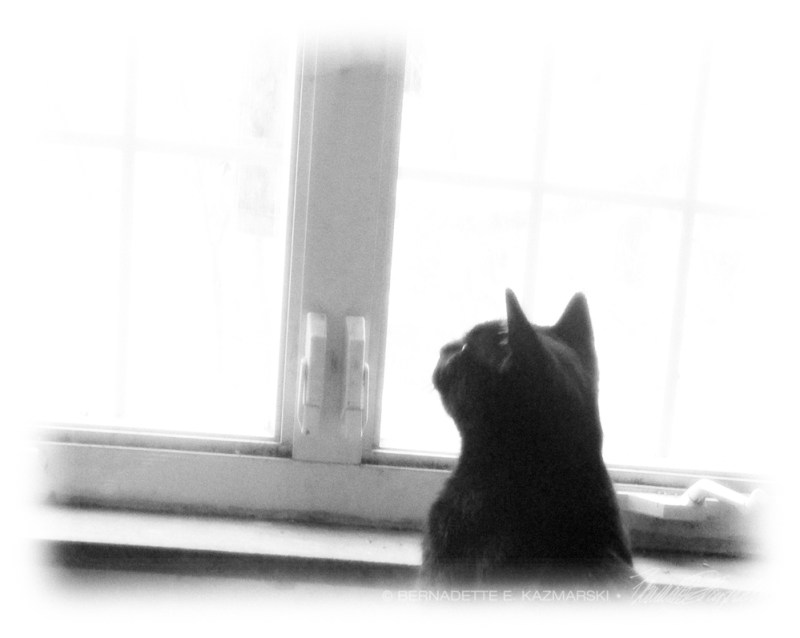 Giuseppe looking out window