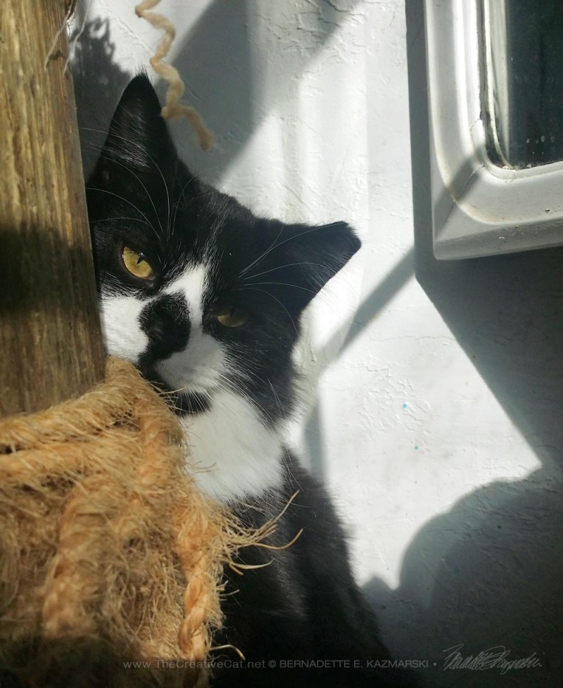 black and white cat behind cat tree