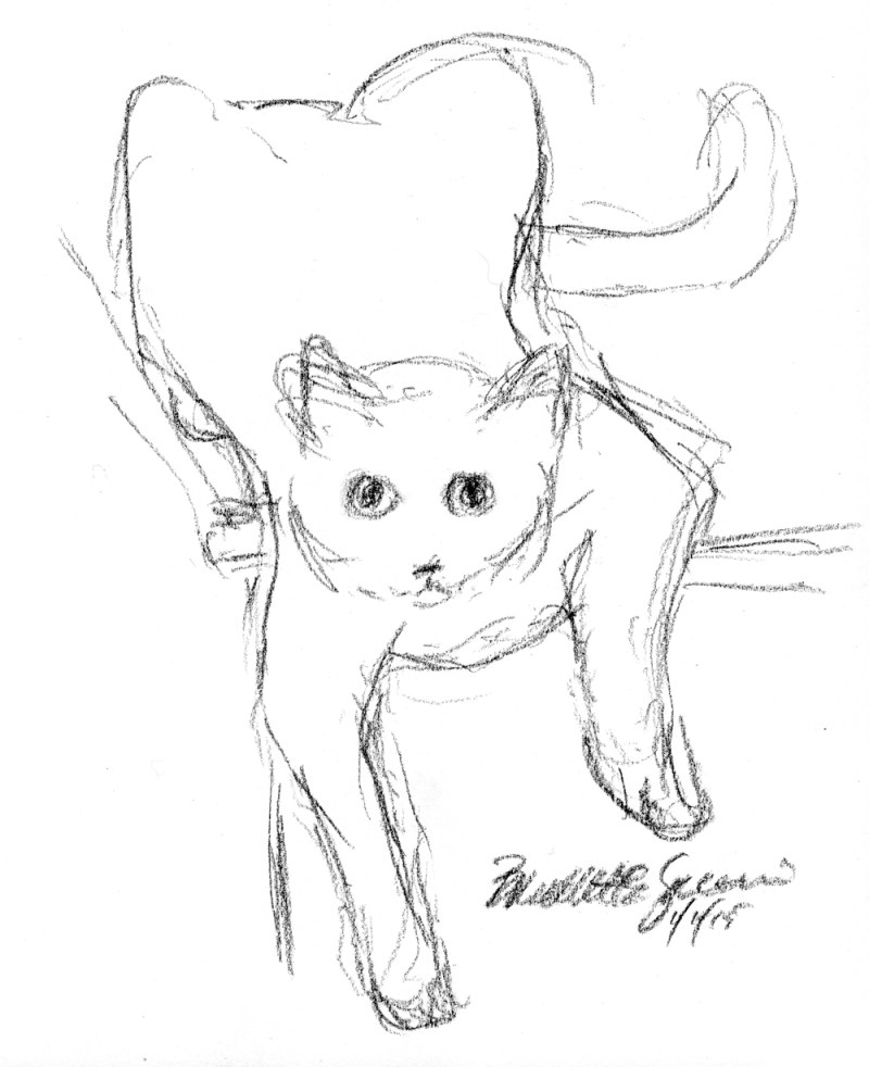 charcoal drawing of cat