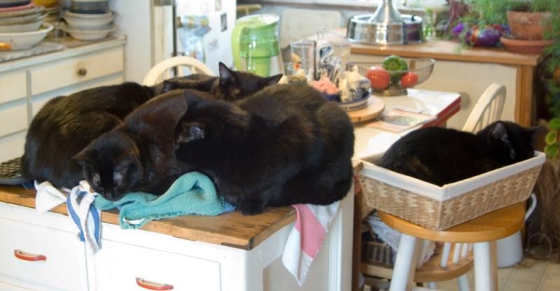 five black cats