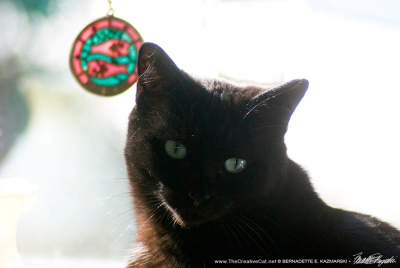 black cat with pisces ornament