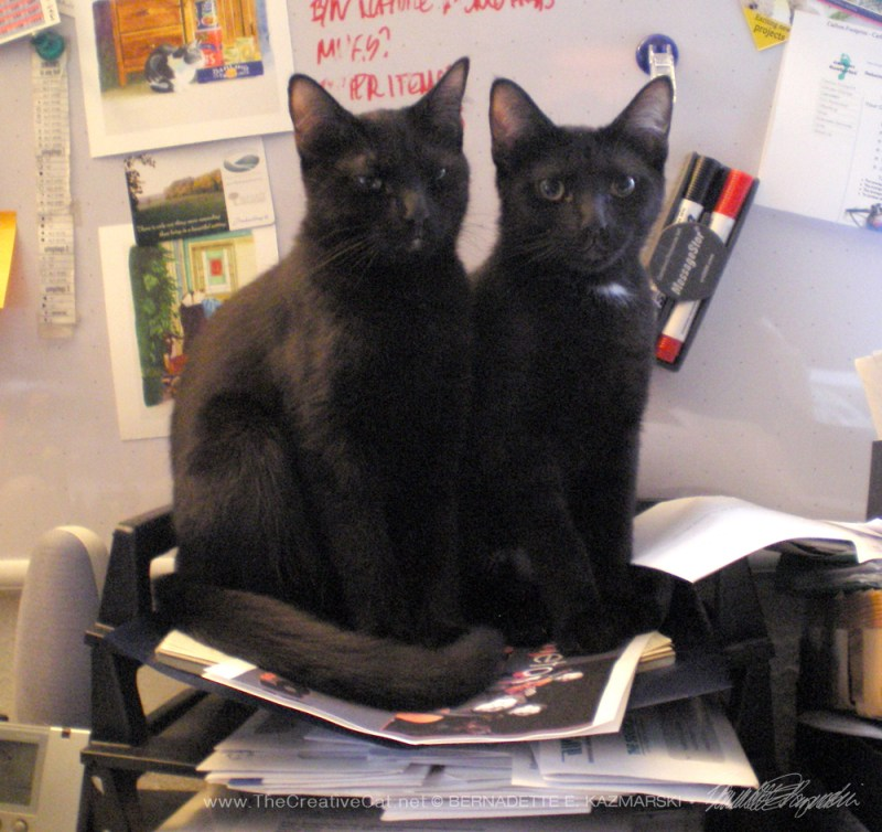 two black cats in sorting bin