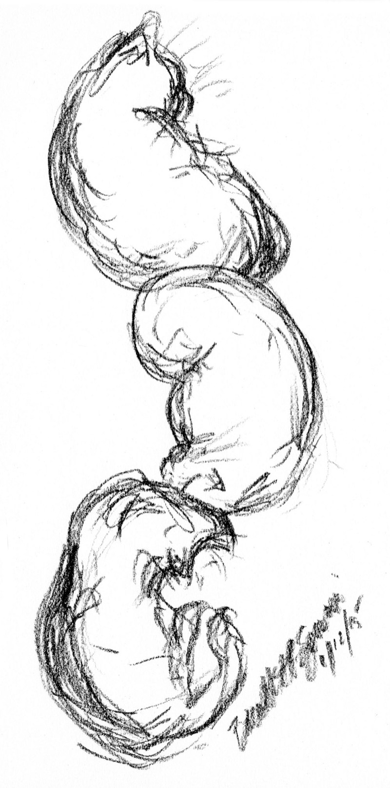 sketch of three black cats