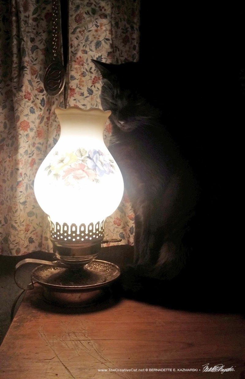 Bella by her keep-warm lamp.