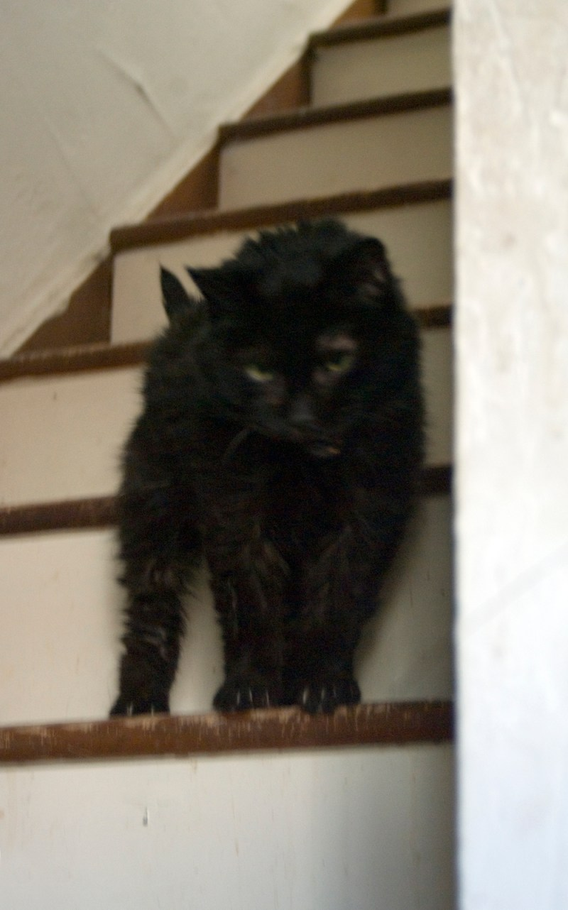 black cat on steps