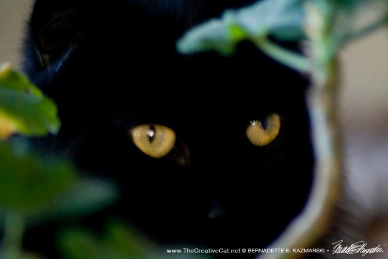 Hamlet peers from behind the geranium.