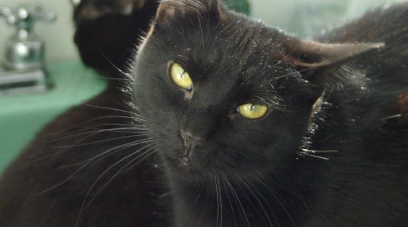 black cat with head tilt