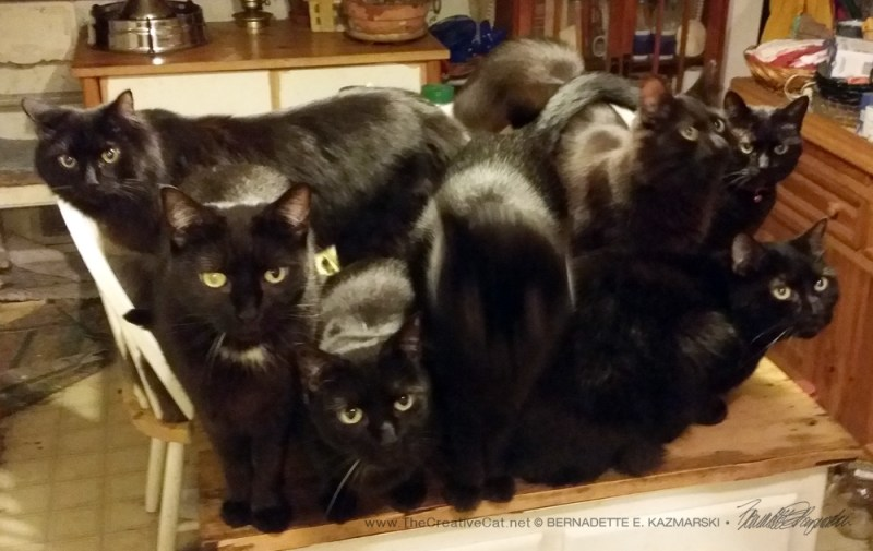 Eight cats, but you can't see Theo.