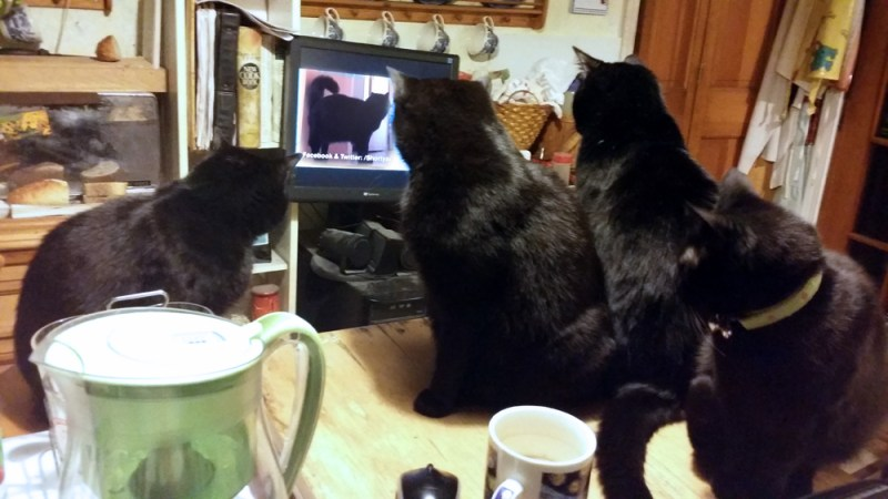 four black cats watching movie