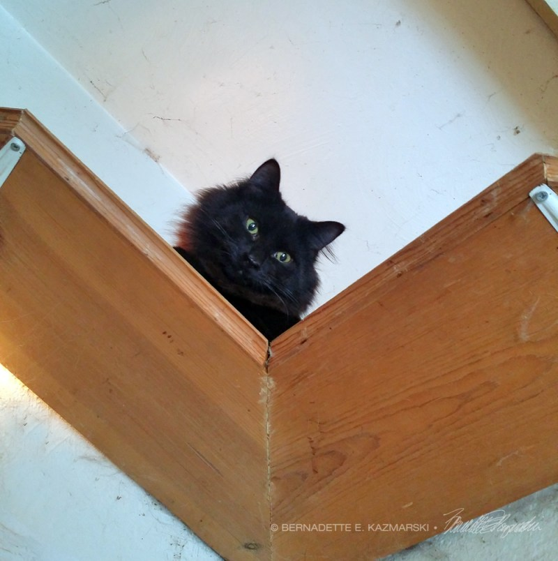 black kitten on shelf.