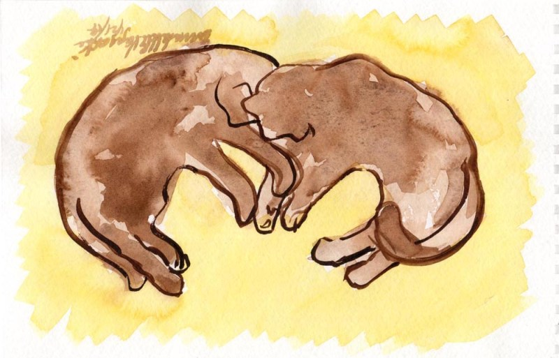 watercolor of two cats sleeping