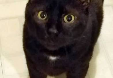 Cats for Adoption: Bo, Your TV Buddy