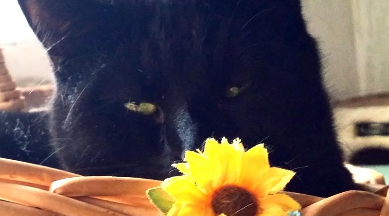 black cat with flower