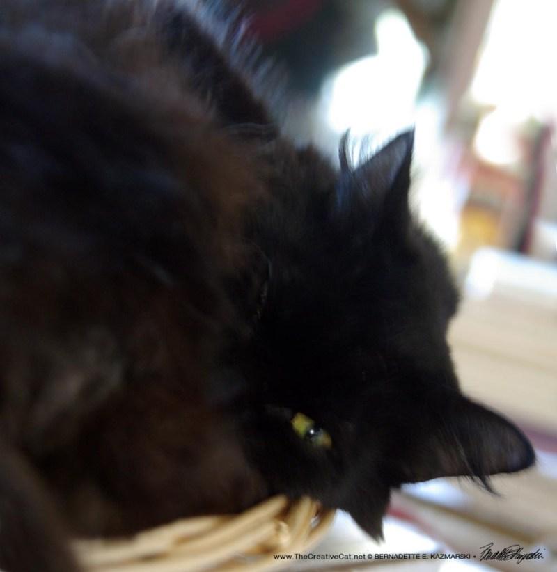 Basil in the basket.