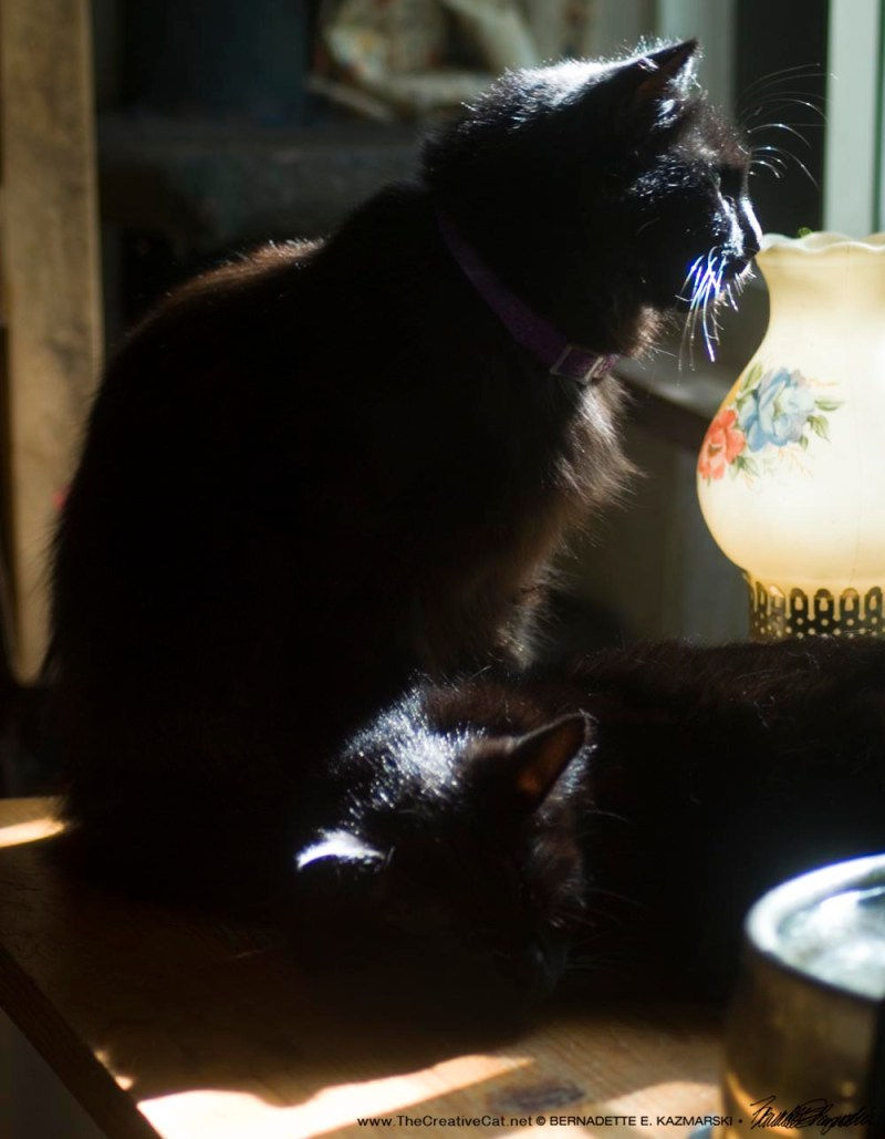 two black cats in the sun