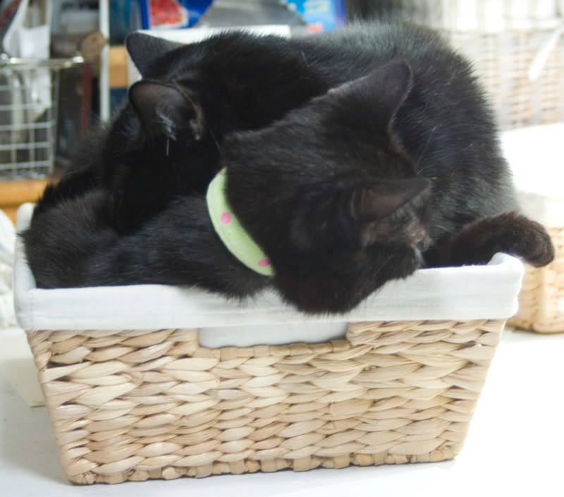 two black cats in basket.