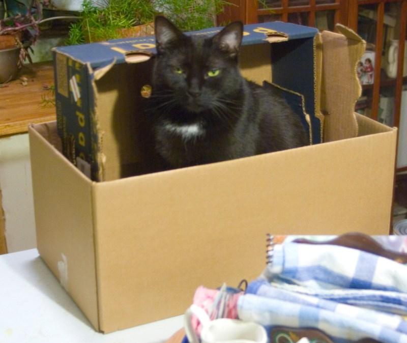 black cat in boxes