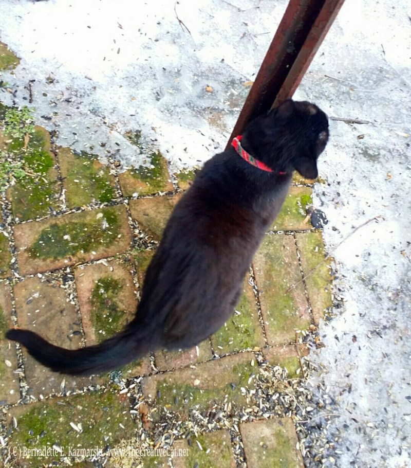 Mimi leaves her scent on the pole.
