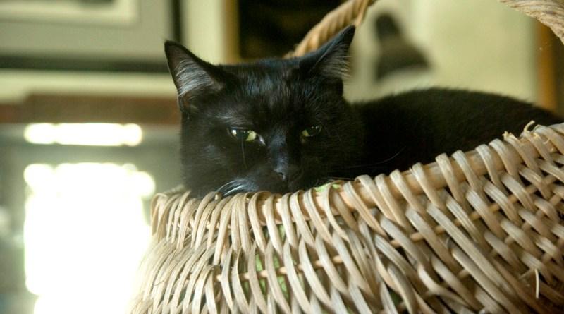 Bean in a Basket