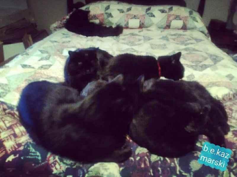 five black cats cuddling