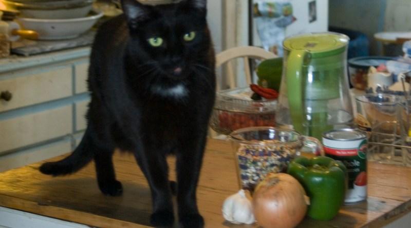 black cat wth bean soup mix