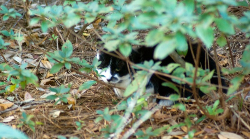 One of the feral cats I saw.