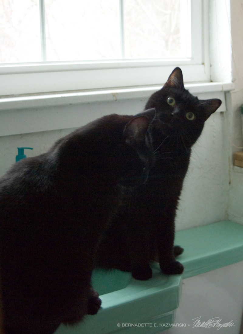 black cats on green sink