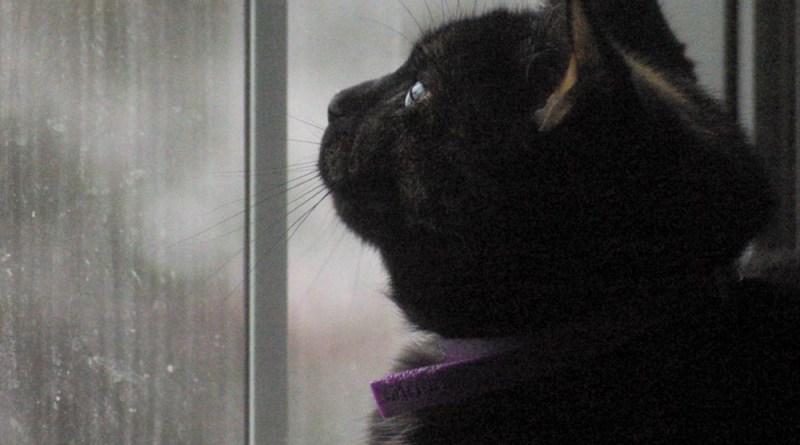 Sienna Birdwatching