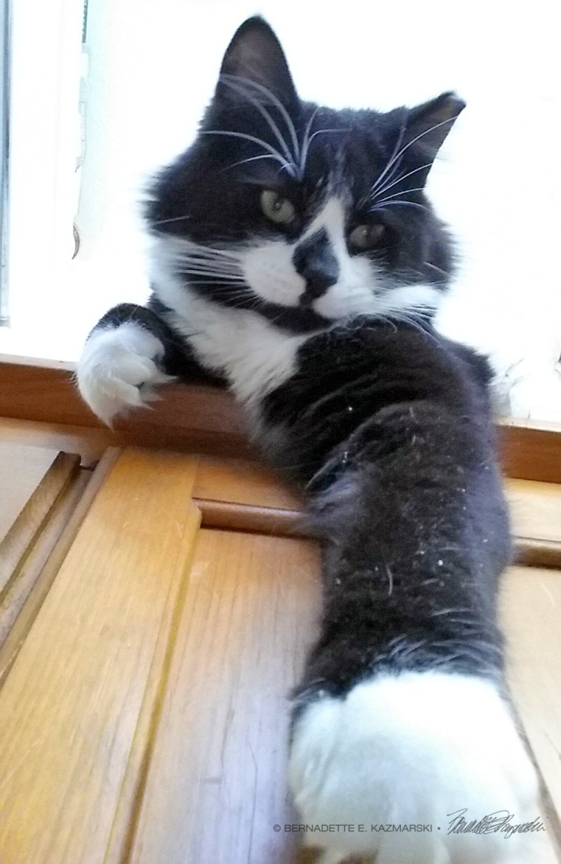 black and white cat with paw