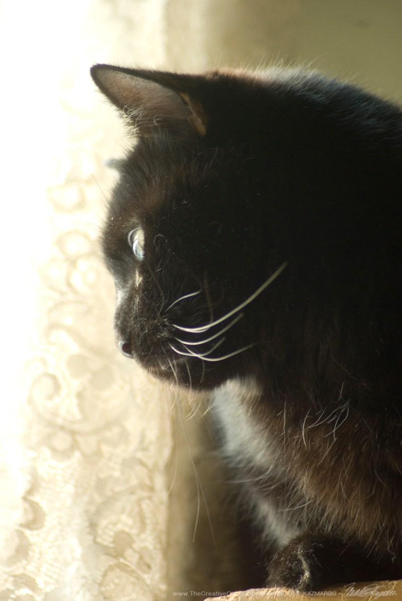 Mewsette watches at the window in the morning sunlight.