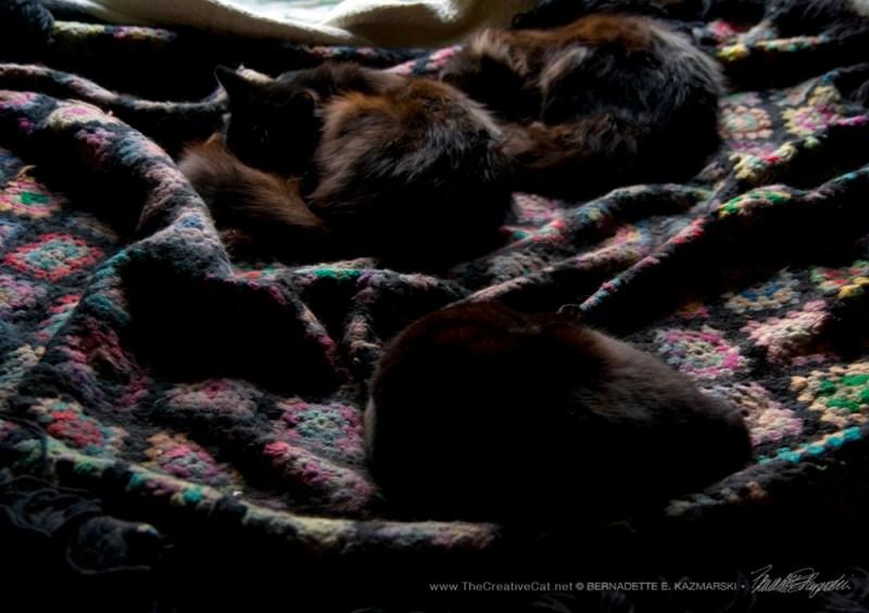 Basil and Bella keep Hamlet company.
