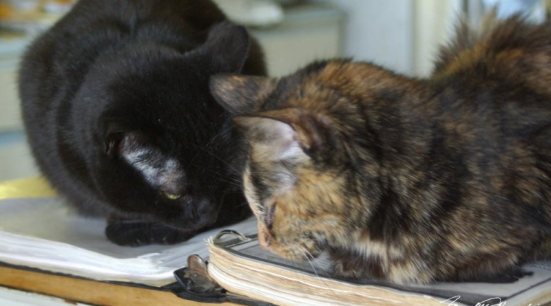 black cat and tortoiseshell cat in deep conversation