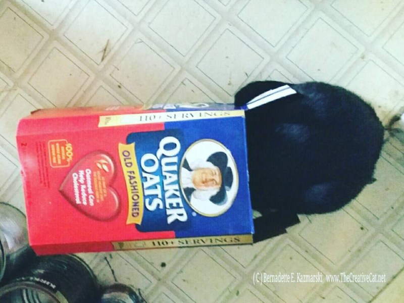 Giuseppe with his head in a box of oatmeal.