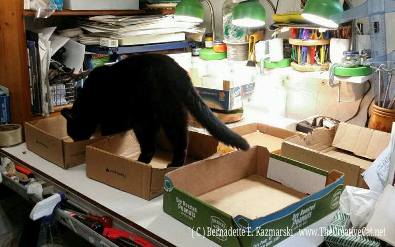 Mr. Sunshine is the first guest to arrive for the afternoon box party in the studio so he gets first dibs on boxes--he's thoroughly inspecting each one. (I know they love it but it's really for me. How do you suppose I get anything done in a small room full of cats?)