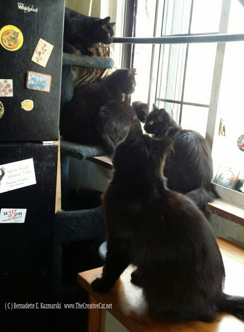 OPEN WINDOW! Bella, Jelly Bean, Mimi, Hamlet, Basil. Of course there's a screen.