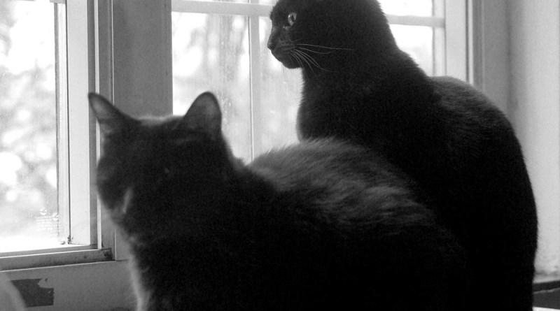 Bella keeps watch.