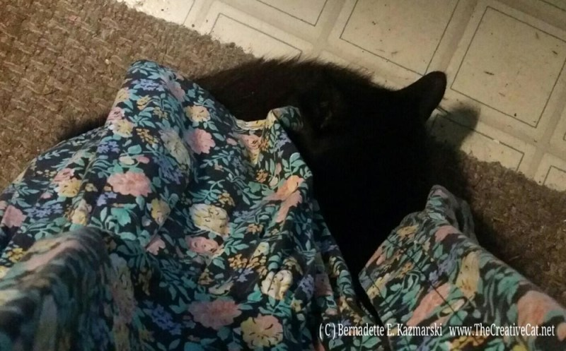 Basil sleeping on my feet.