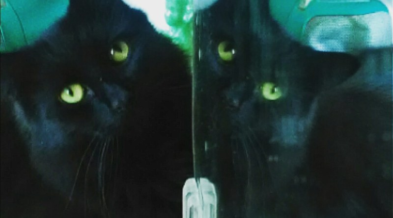 black cat reflected in mirror