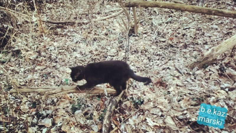 black cat scratching on branch