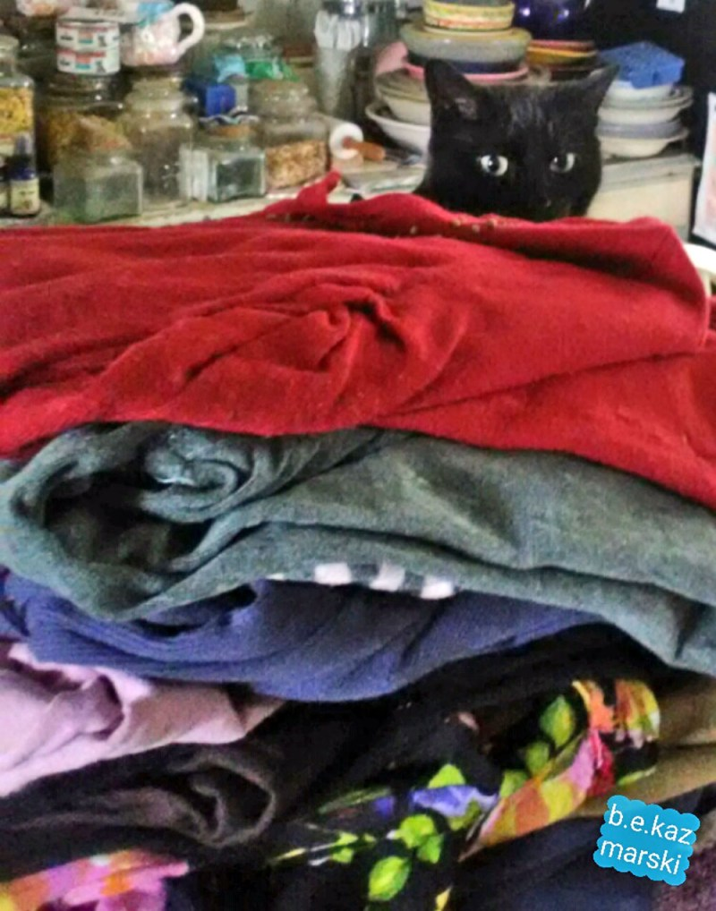 black cat with laundry