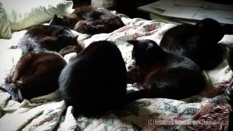 Six black cats in a semi-circle on the bed.
