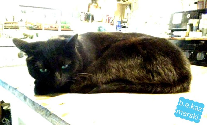 black cat on counter